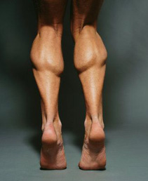 calfmuscles